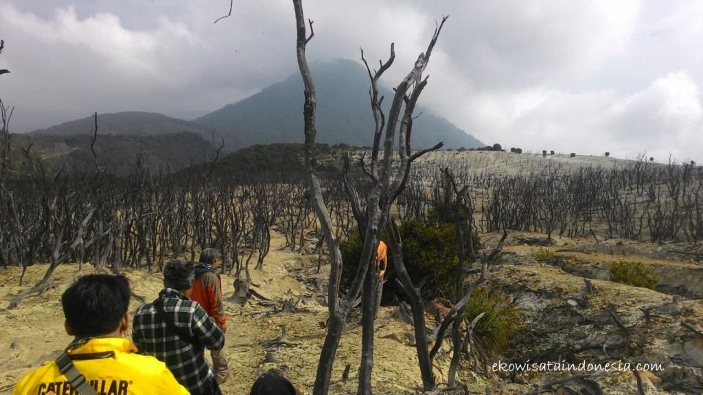 Hutan Mati di Pengunungan Papandayan